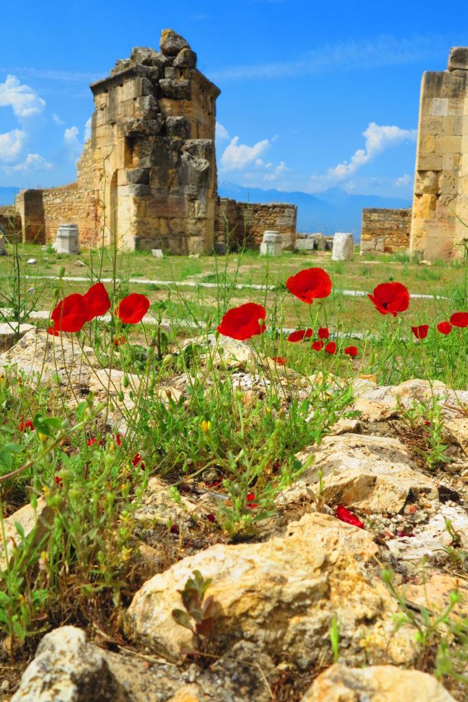 Poppies Hierapolis Turkey 2017